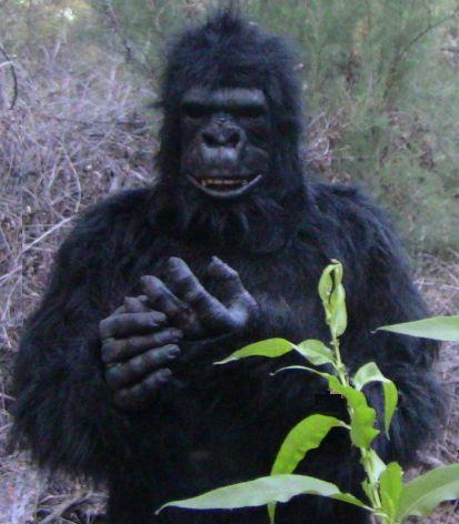 An error occurred. & UndeadMonsters - Gorilla Suits Gorilla Costumes Gorilla Suit ...